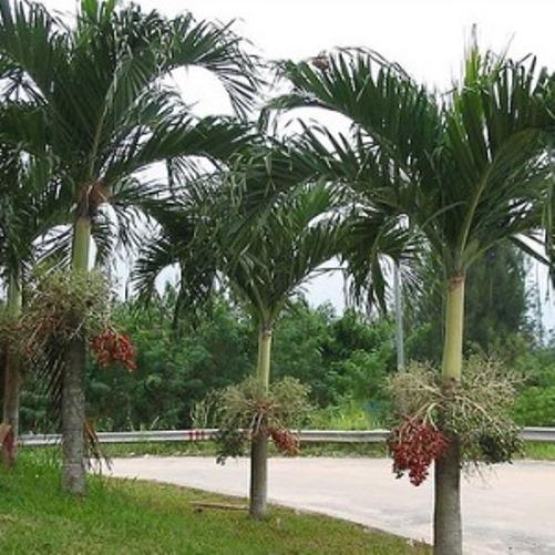 Jasa Landscape Taman dan Jual Pohon Hias Murah